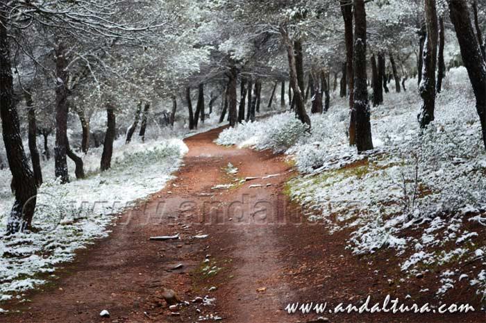 Recorrido BTT en invierno por Andalucía, Dehesa del Generalife