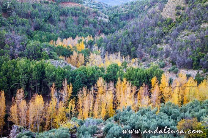Ruta de Senderismo en otoño por el Río Alhama