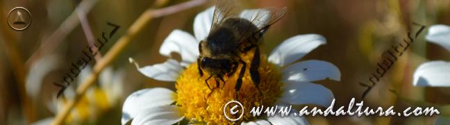 Teclea en la imagen y accede al Especial sobre la Flora y la Fauna de Andalucía