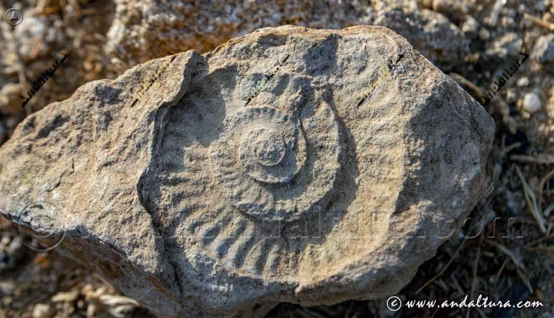 Rutas Paleontológicas en Andalucía
