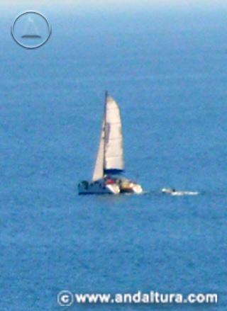 Actividades en Andalucía - Avistamiento de cetáceos -