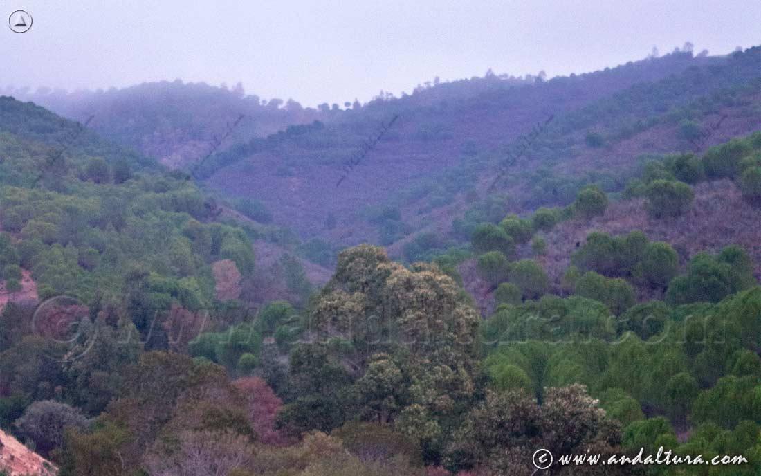 Clima de Andalucía - Mediterráneo Subcontinental Sierra del Aserrador -