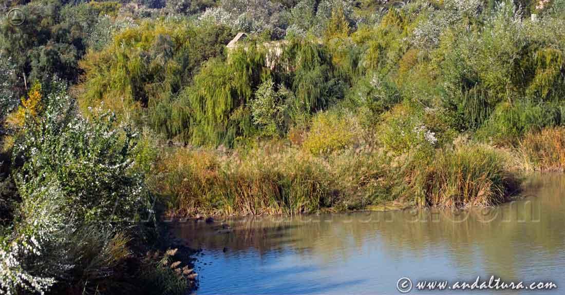 Espacios Naturales Protegidos de Andalucía - Monumento Natural Sotos de Albolafia