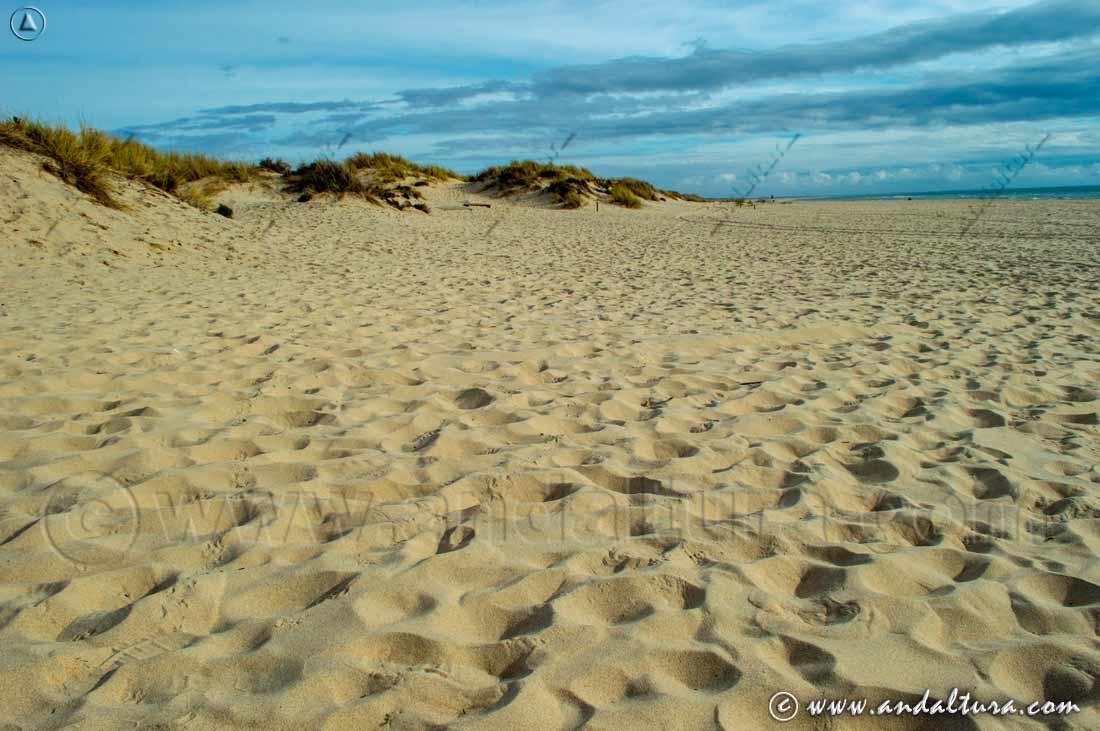 Espacios Naturales Protegidos de Andalucía - Parque Nacional Doñana