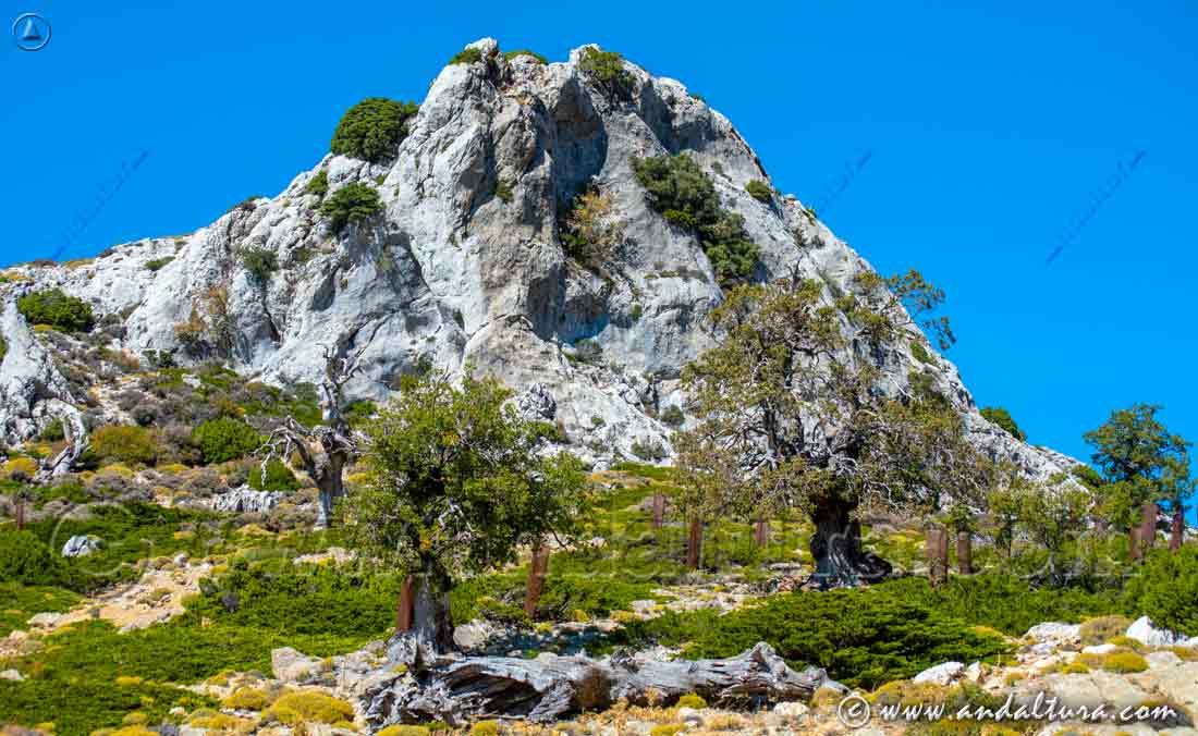 Espacios Naturales Protegidos de Andalucía - Parque Natural Sierra de las Nieves - Reserva de la Biosfera