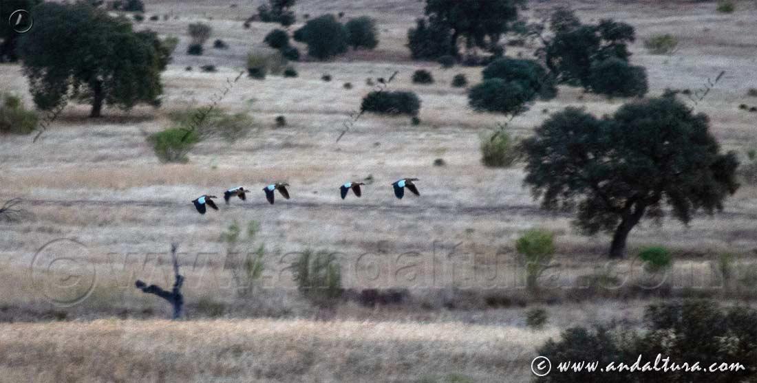 Espacios Naturales Protegidos de Andalucía - Parque Periurbano Fuente la Zarza