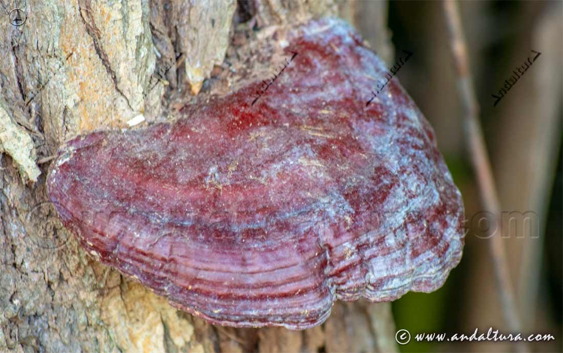 Seta sobre árbol en la Sierra de la Contraviesa