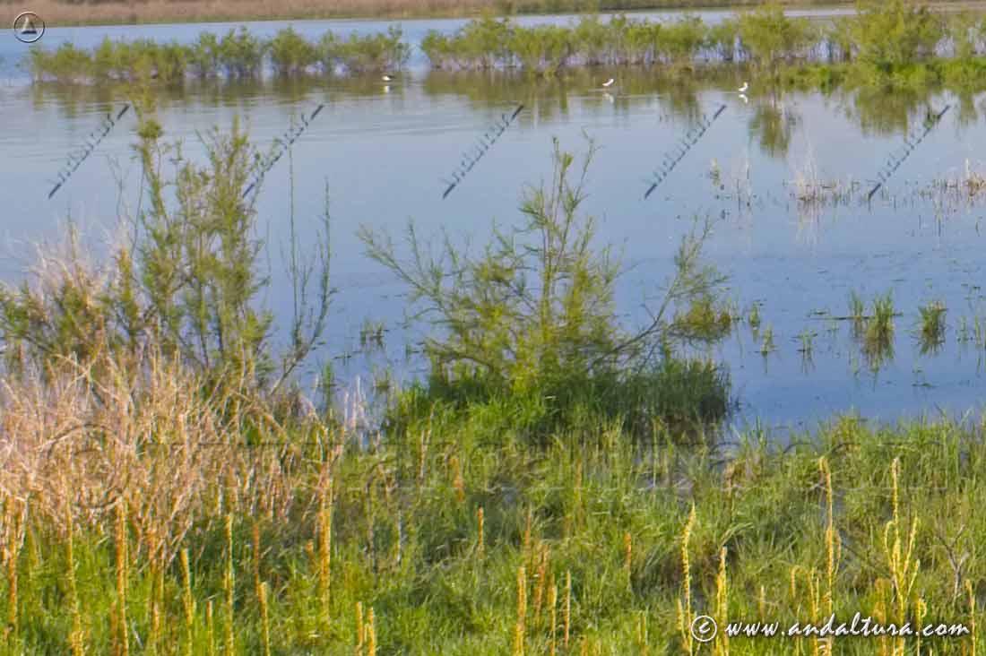 Flora y Vegetación en la Reserva Natural Laguna de la Ratosa