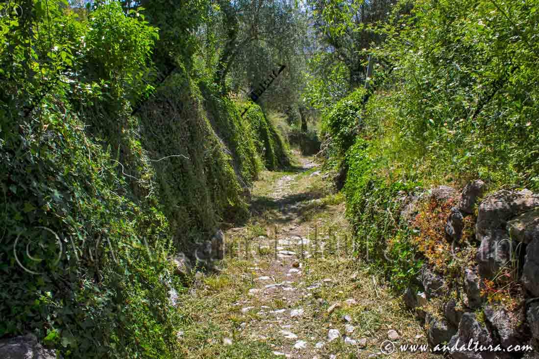 Ruta Medieval por la Alpujarra - Camino empedrado hacia Cástaras