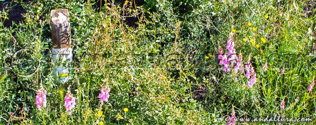 Estaca entre vegetación en la Ruta Medieval por la Alpujarra