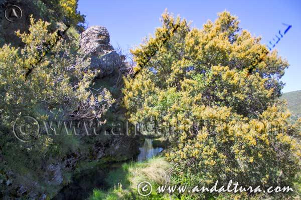 Entorno de la ruta por la Acequia de Almegíjar o de Trevélez