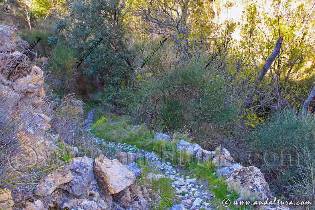 Vereda llegando a la Fuente de la Alberca - Barrio Alto de Cástaras -