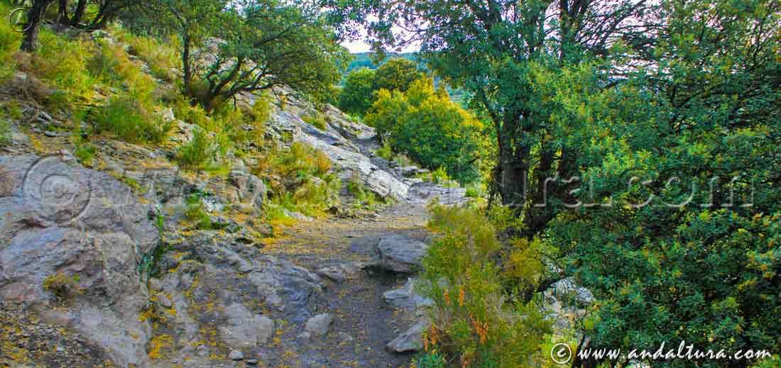 Encinares en la Ruta Medieval por la Alpujarra