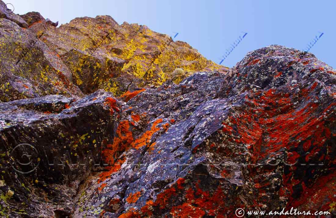Colorido de líquenes en el Coladero de la Alcazaba - Tajos Colorados -