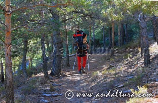 Senderismo en Andalucía - Ruta por el GR142 hacia La Polarda -