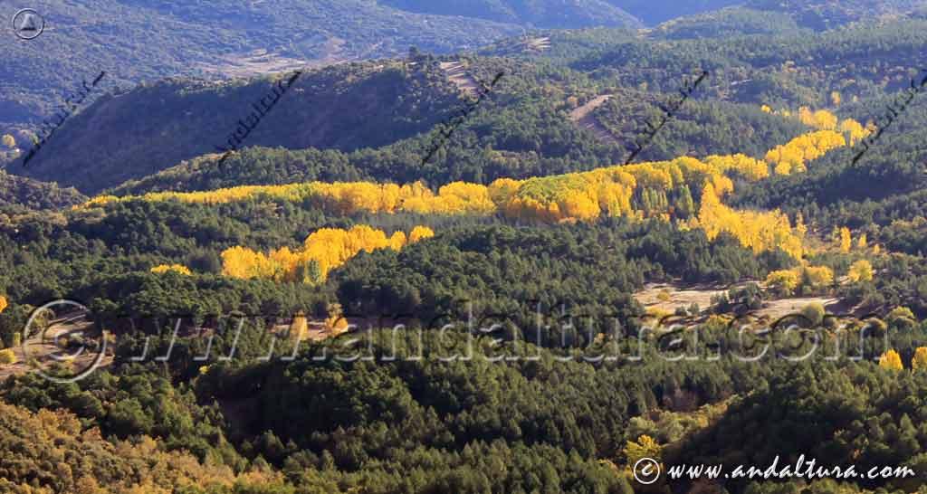 Contrastes de colores en otoño en Andalucía