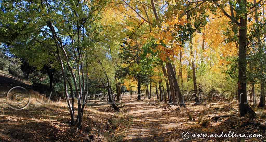 Las Mejores Rutas de Senderismo en otoño por Andalucía